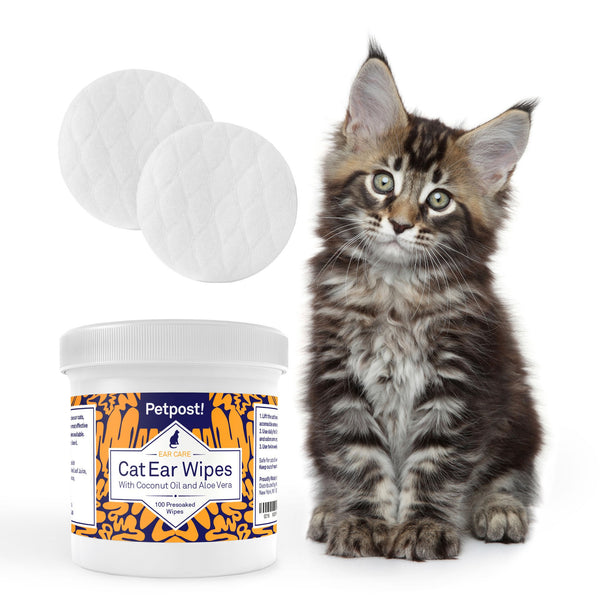 Best cat ear wipes - How to clean cats ears? - Beautiful cats