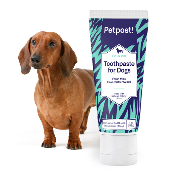 petpost toothpaste for dogs with dachshund puppy