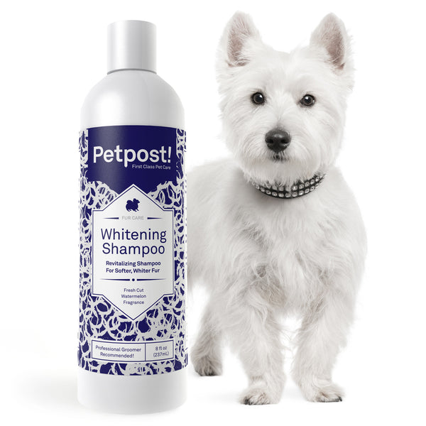 Whitening Shampoo For Dogs | Best Dog Shampoo - Maltese Dog