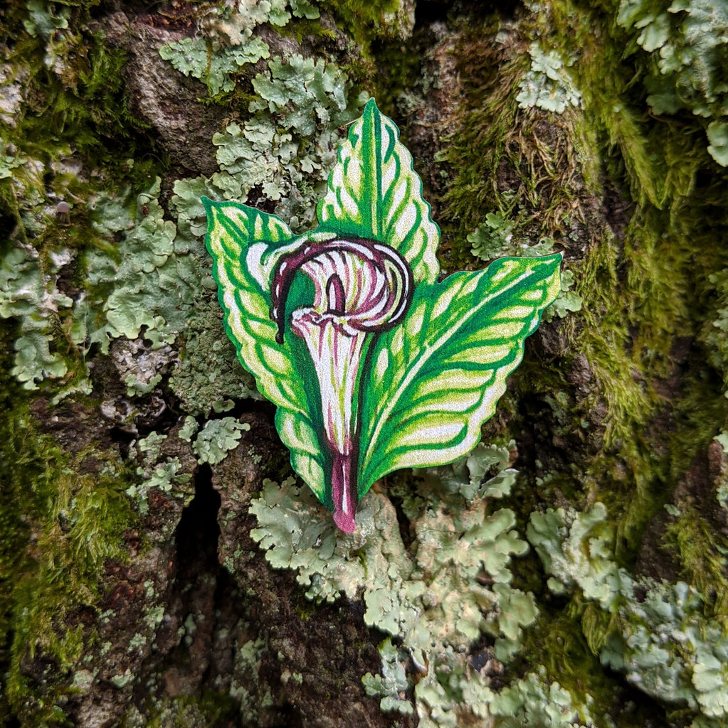 Jack-in-the-pulpit Brooch