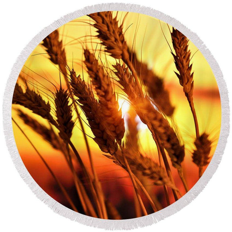 Ears Of Wheat In The Field. Evening Light - Round Beach Towel