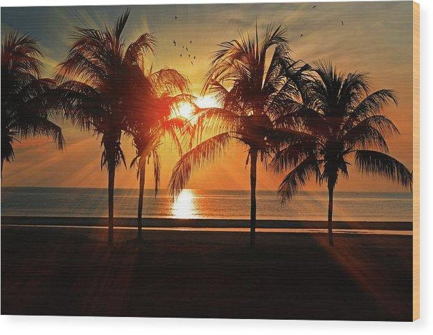 Palm Calm - Wood Print