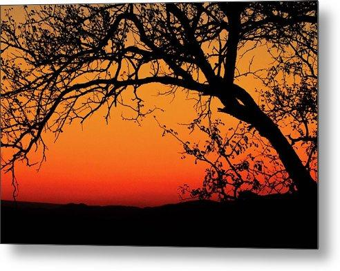 Tree Silhouette - Metal Print