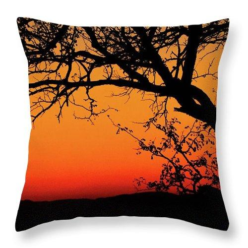 Tree Silhouette - Throw Pillow
