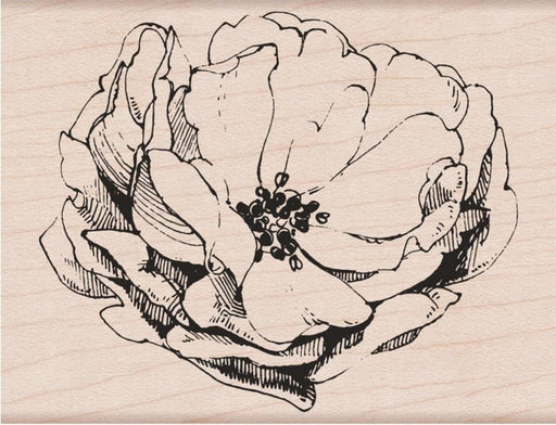"Hero Arts Mounted Rubber Stamp 4.25"" x 3.25"" Antique Rose HA-K6135 
