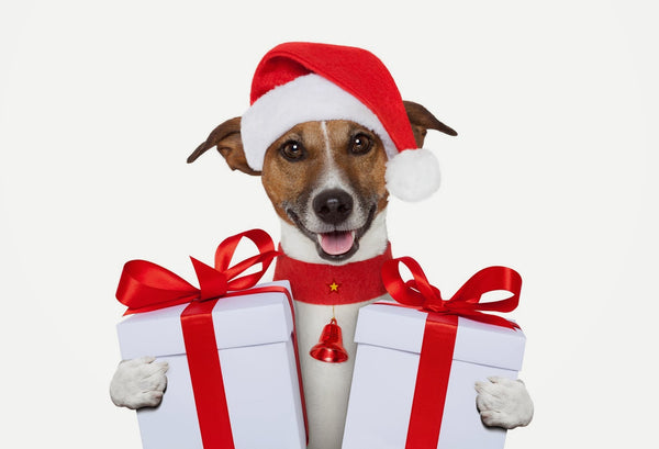 Great Gift Ideas for Pets - Cyber-Monday Deals - Black Friday 2016 Sale!