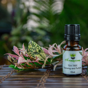 Tea Tree Australian Essential Oil - Malaleuca alternifolia