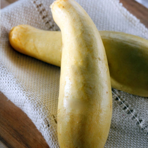 Organic Yellow Squash Fancy - Milk and Eggs