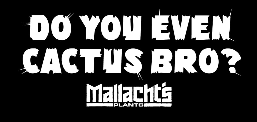 """Do You Even Cactus Bro?"" - Mallacht's Plants Sticker [2"" x 4""]"