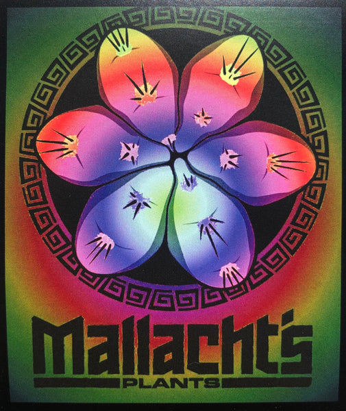 """Tie Dye"" - Mallacht's Plants Sticker [3 x 3.5""] *NEW VINYL VERSION*"