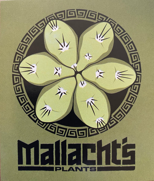 """Tricho-Top Olive Green"" - Mallacht's Plants Sticker [3 x 3.5""]"