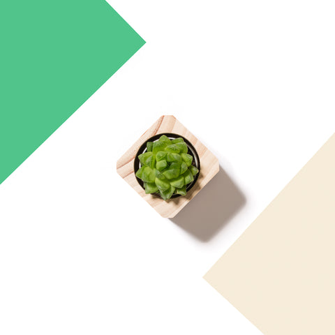 Succulent Planter | The Mini