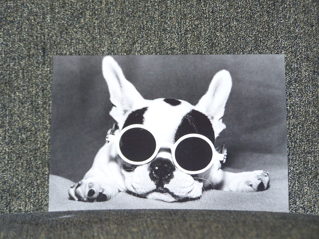 Dog with Sunglasses Blank Card