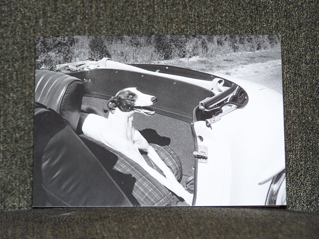 Dog in Car Blank Card