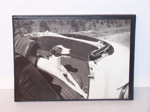 Framed Dog in Car Card