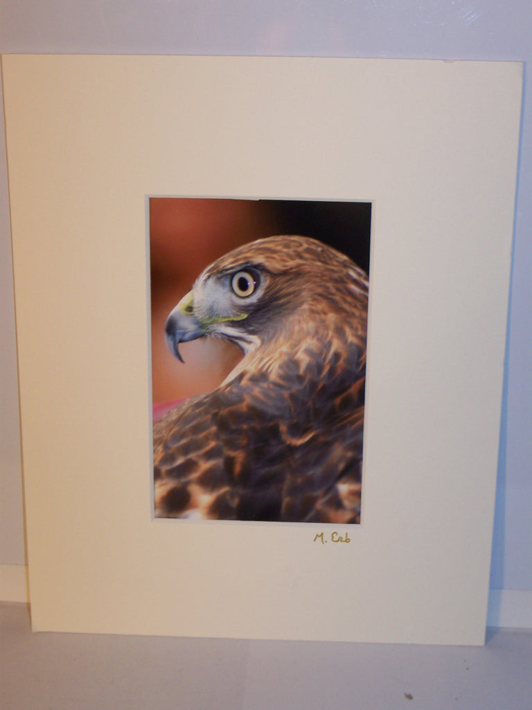 Matted, Signed Eagle Photo