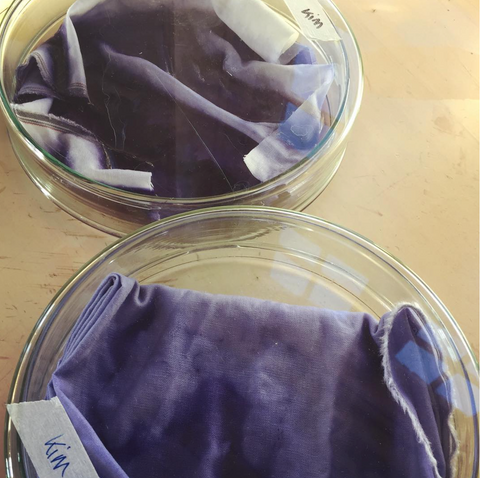 bacterial dyes