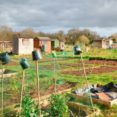 Allotments Short Course - Getting the best from your plot