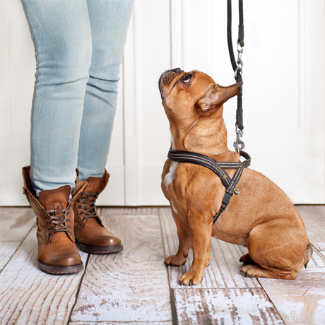 Beginners' Short Course in Dog Training and Canine Behaviour