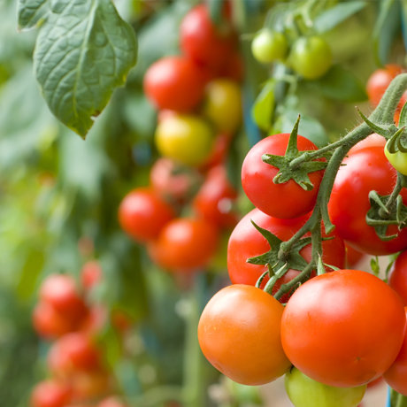Grow Your Own Fruit & Vegetables Short Course