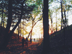 people hiking in forest