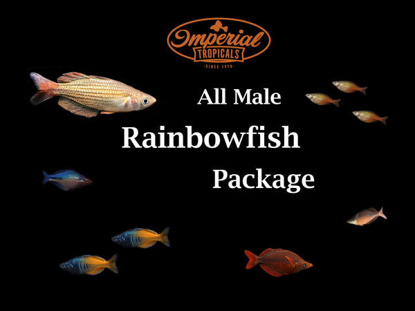 All Male Rainbow Package