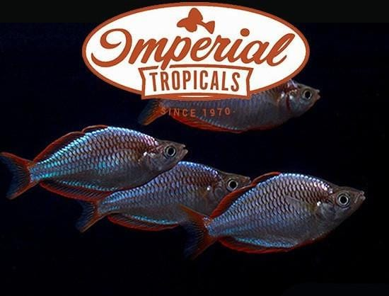 Gift Card - Imperial Tropicals