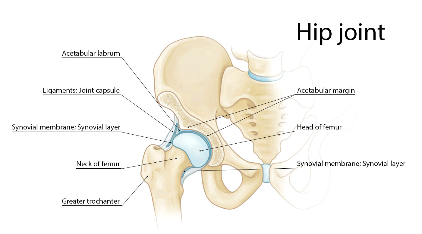 ballet labral tear, hip joint picture