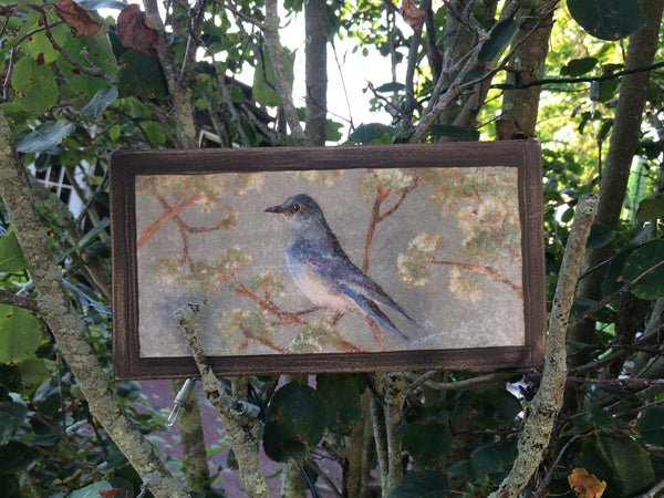 mountain_bluebird_plaque_in_the_garden