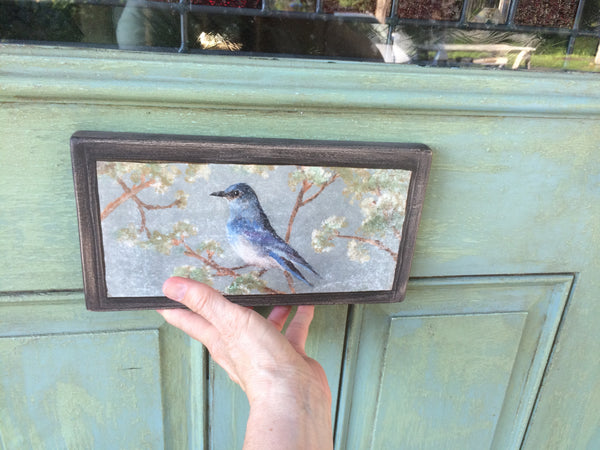 mountain_bluebird_on_covered_porch_door