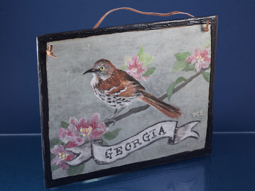 GA/Brown Thrasher