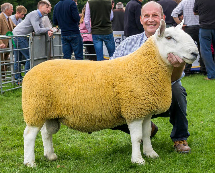 George Milne, Breeder and advocate for Scotch Lamb