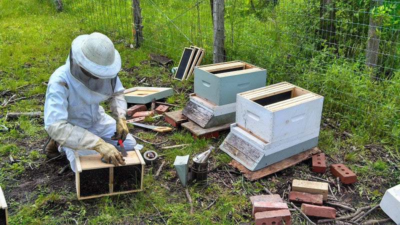 Hiving Bees: June 1, 2013
