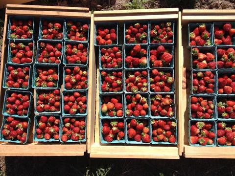 Strawberry Season is here! July 2016