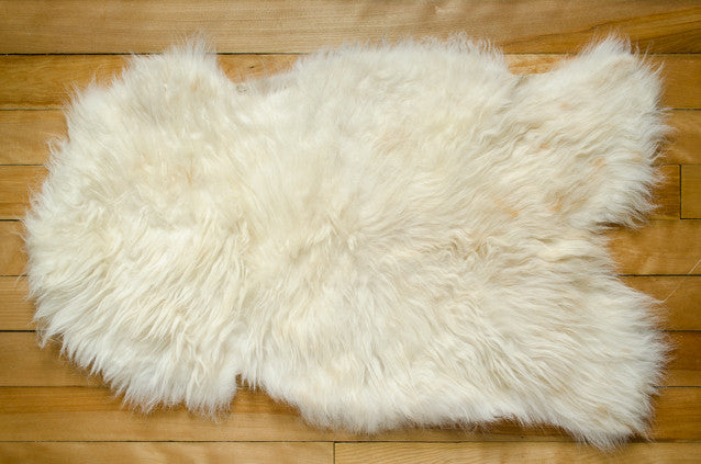 Small White, Short Coat Icelandic Pelt (451-11)
