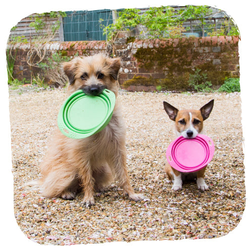 Beco Pets Collapsible Travel Bowl Green - Fernie's Choice Classic Country Wear for Dogs