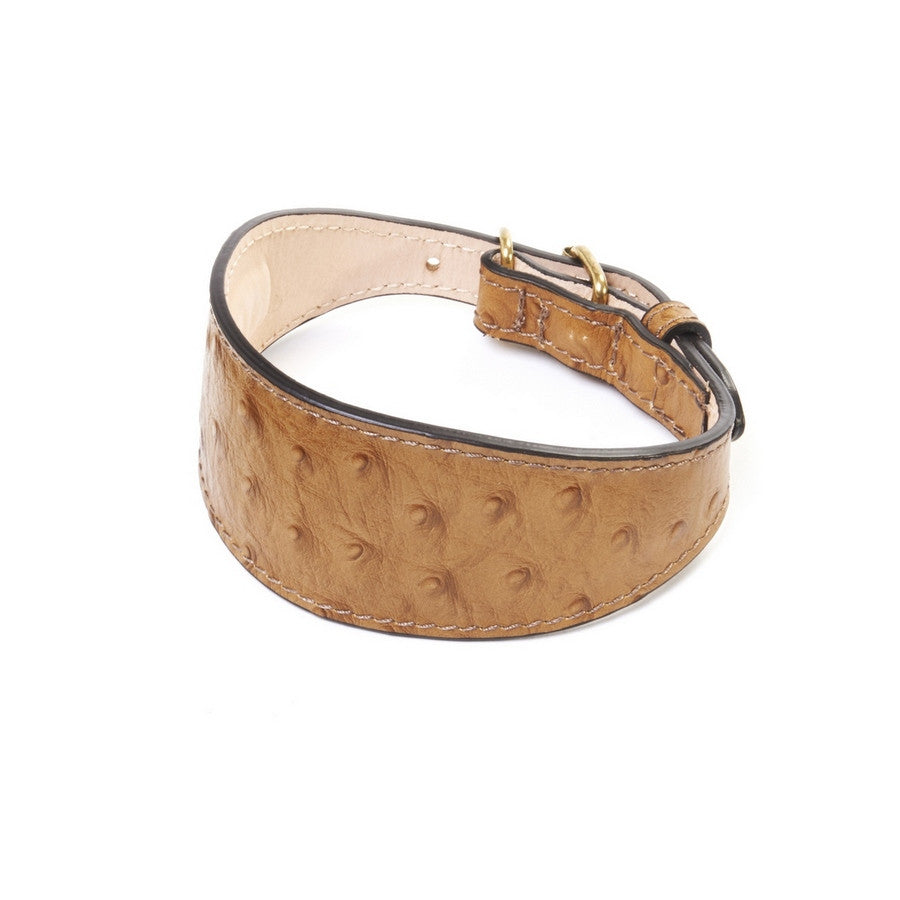 DA VINCI Luxury Ostrich Leather Greyhound Collar - Fernie's Choice