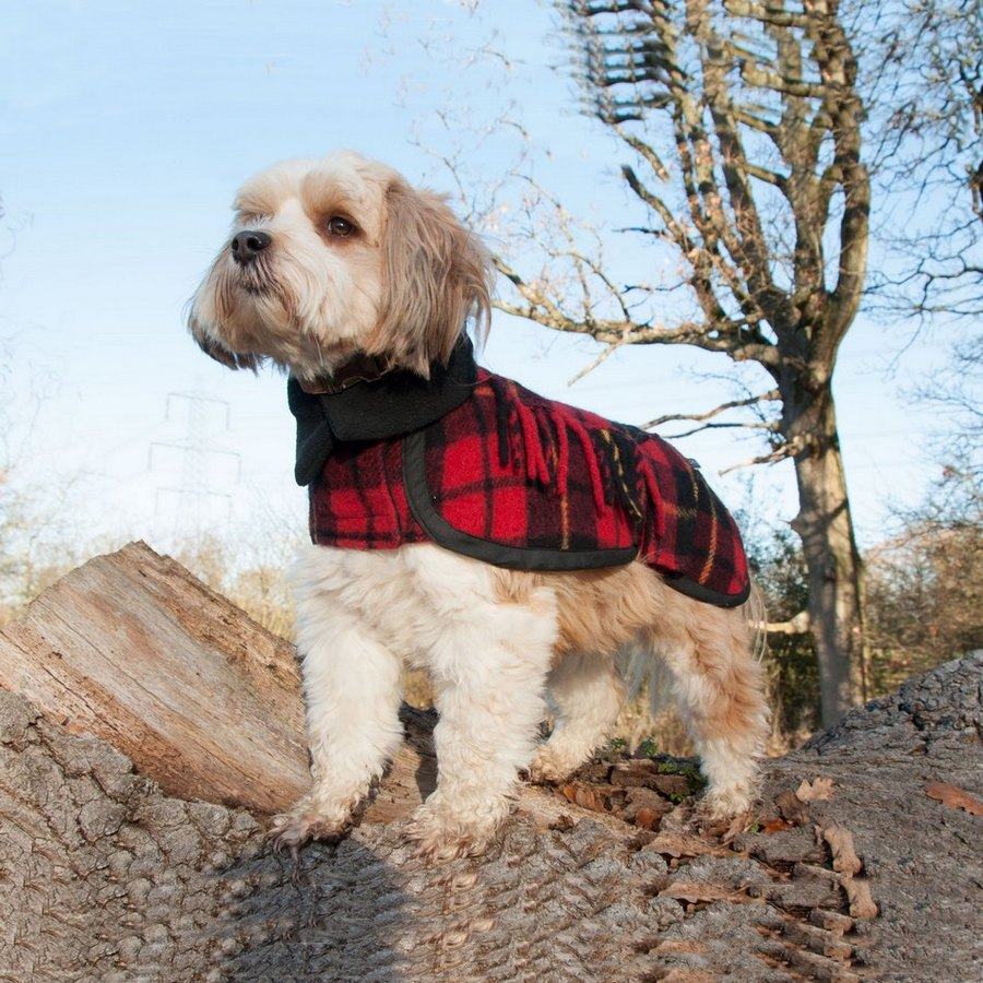 Crystal Wolf Dog Coats - Fernie's Choice Classic Country Wear for Dogs