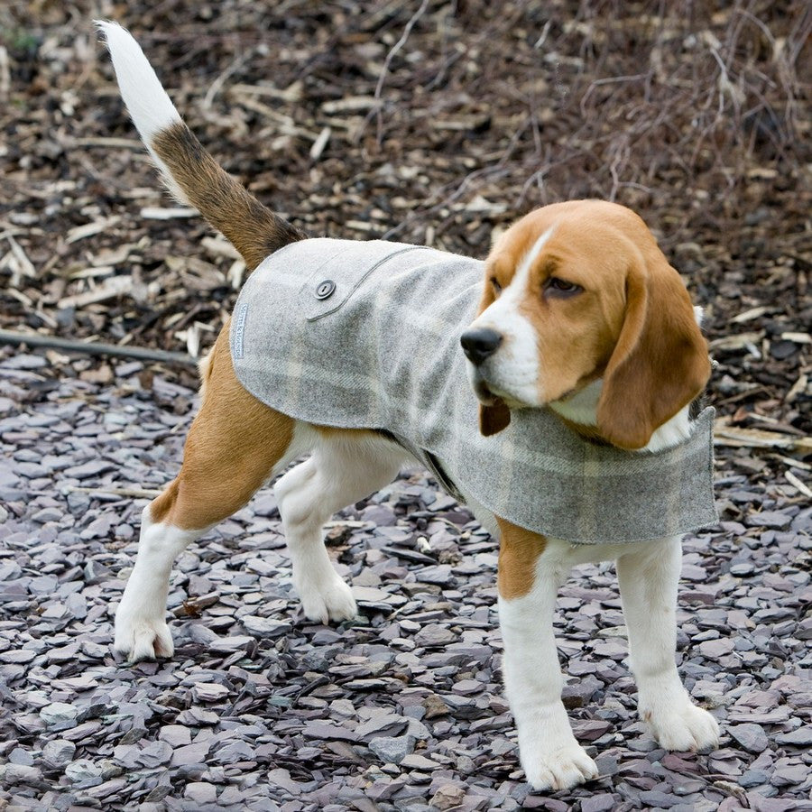 Slate Tweed Coat - Fernie's Choice Classic Country Wear for Dogs