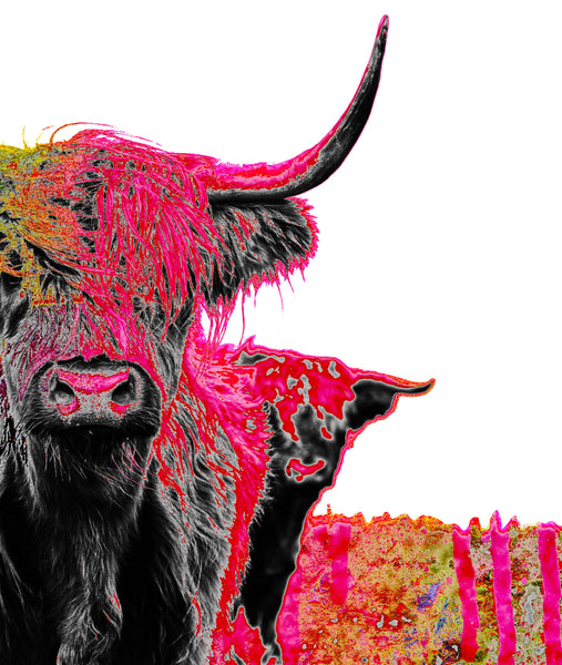 Pink Painted Highland Cow Art Canvas Wall Art