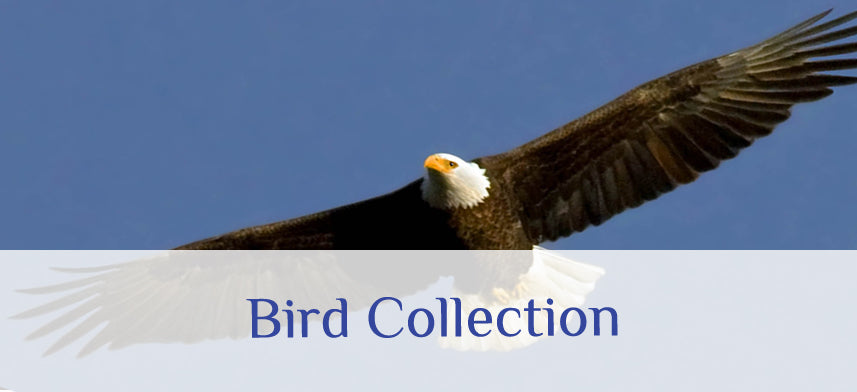 About Wall Decor's Bird Collection