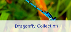 Shop About Wall Decor's Dragonfly Collection