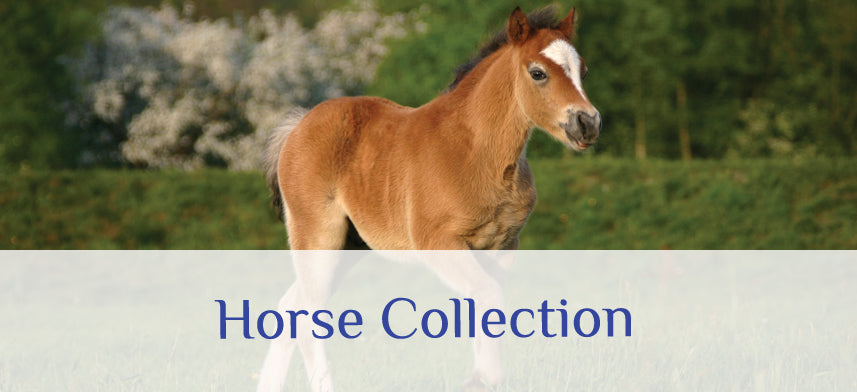 About Wall Decor's Horse Collection