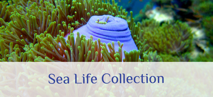 About Wall Decor's Sea Life Collection