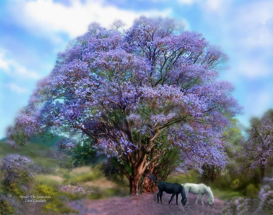 "cavalaris ""under the jacaranda"" wall decal"