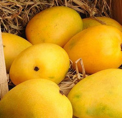 Large Chausa Mangoes from Uttar Pradesh