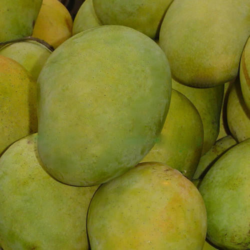 Large Langra Mangoes from Uttar Pradesh
