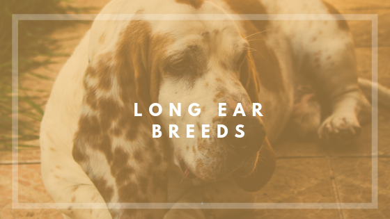 For Hounds and dog with longer ears