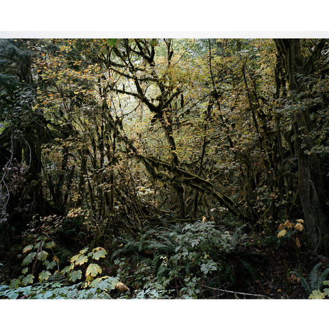 Mamquam forest II, British Colombia, 2013
