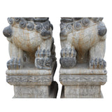 Chinese pair lion dog statue